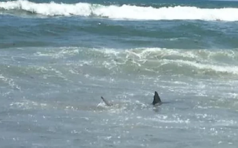 Lifeguards Close Beach In Cocoa Beach Due To Sharks Memorial Day Weekend